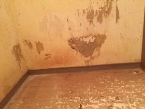 ペットの糞尿で傷んだ床