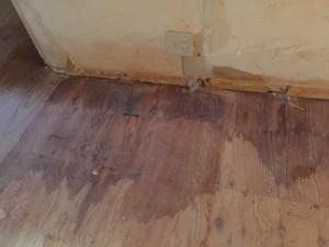 床下張りに尿の跡が浸透